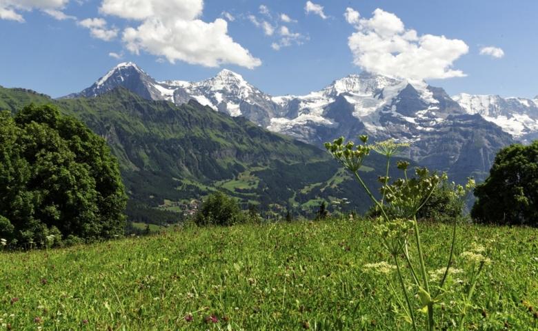 Interlaken Jungfrau Tour 011 copy